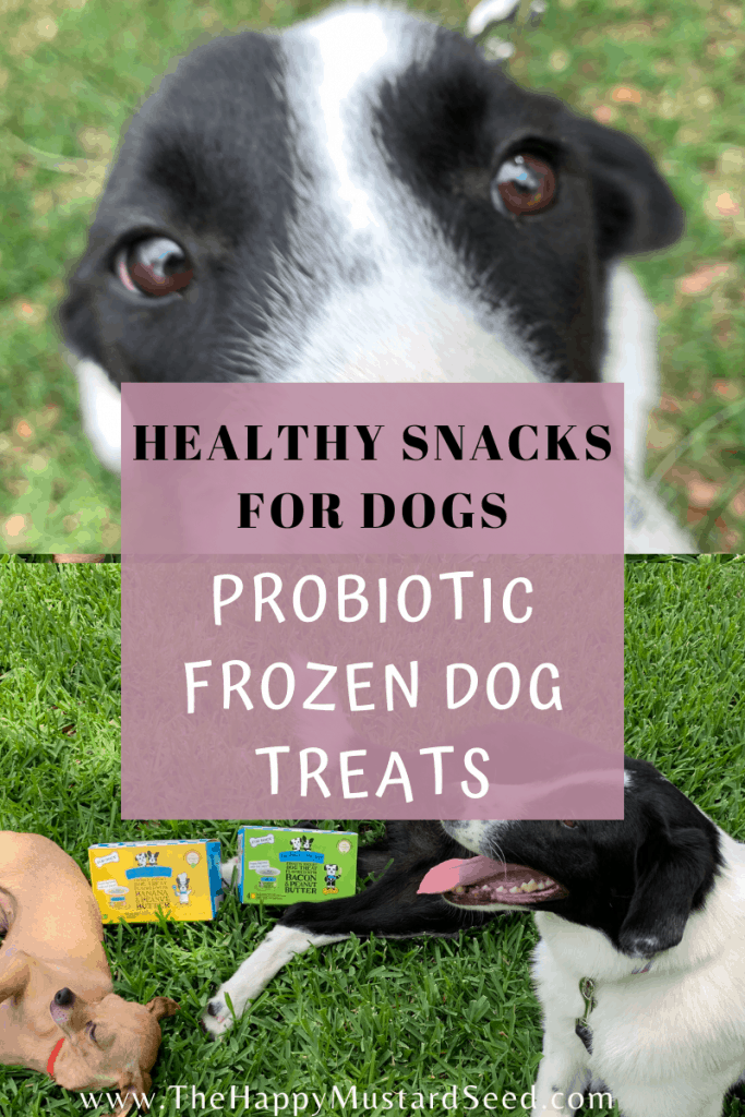Healthy Dog Treats for Dogs The Bear and the Rat
