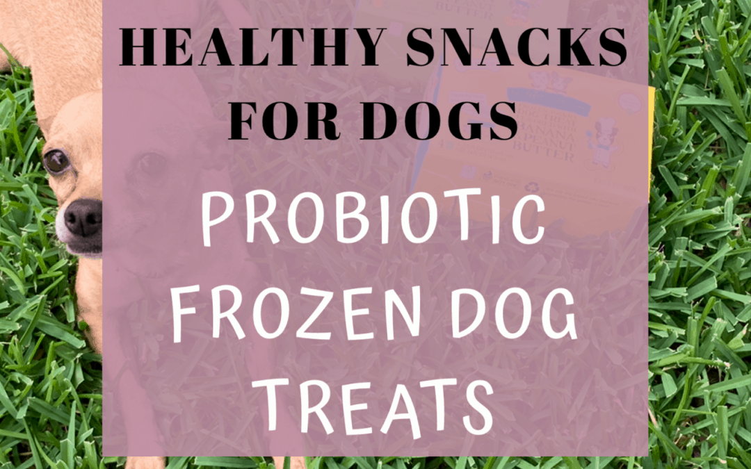 Healthy Snacks For Dogs – Probiotic Frozen Dog Treats