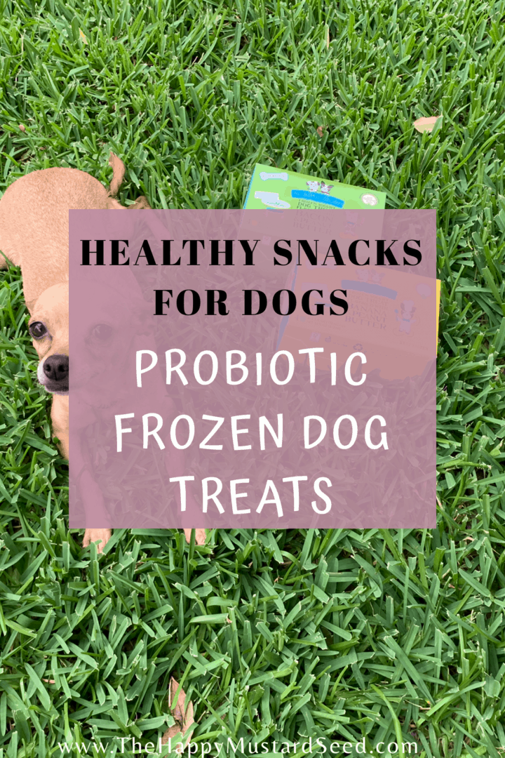 Healthy Snacks for Dogs The Bear & the Rat