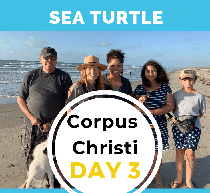CORPUS CHRISTI – DAY 3 – Kemp's Ridley Sea Turtle -North Padre Island National Seashore