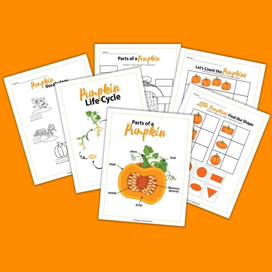 Pumpkin Life Cycle activity guide