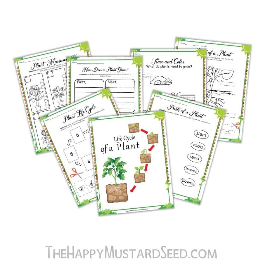 A printable Fall activity sheet for kids to learn about the life cycle of a plant. Plant activity sheet