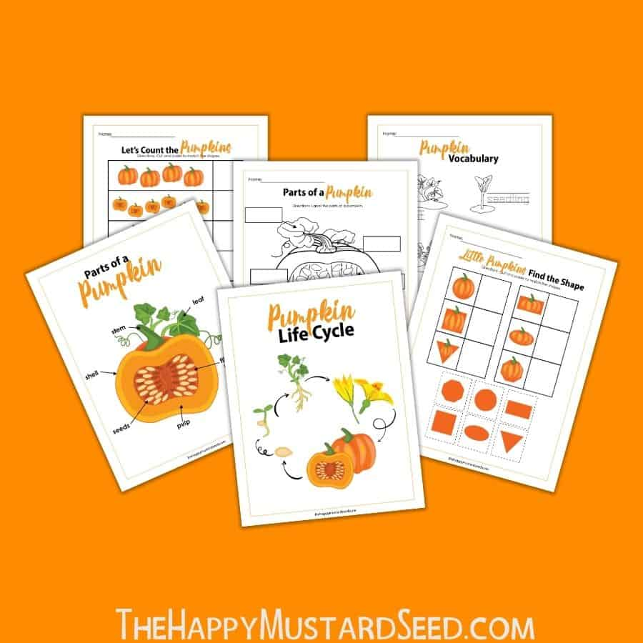 Pumpkin Activity Sheet Kids Activity Sheet A printable Fall activity sheet for kids to learn about the life cycle of a pumpkin
