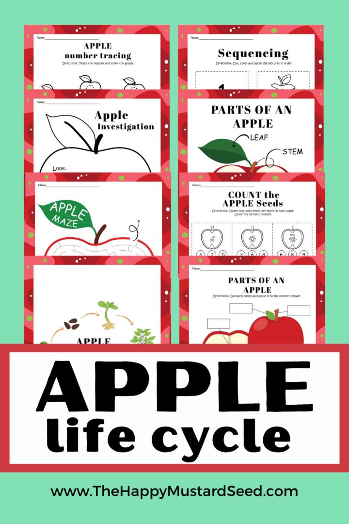 Apple Life Cycle Printables for Kids